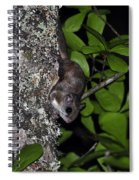 Southern Flying Squirrel Spiral Notebook