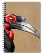 Southern Ground Hornbill Portrait Side View Spiral Notebook