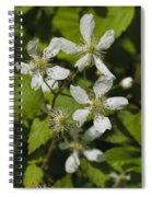Southern Sawtooth Highbush Blackberry Blossoms - Rubus Argutus Spiral Notebook