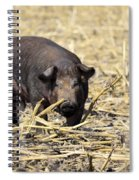Sow In The Field Spiral Notebook