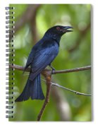 Spangled Drongo Calling Queensland Spiral Notebook
