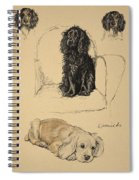 Spaniels, 1930, Illustrations Spiral Notebook