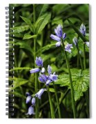 Spanish Bluebells Spiral Notebook