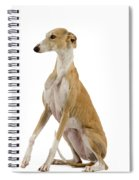 Spanish Galgo Spiral Notebook