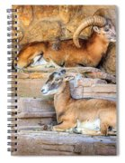 Spanish Ibex Spiral Notebook