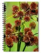 Sparganium Spiral Notebook