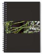 Sparklers Spiral Notebook
