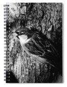 Sparrow On A Tree Spiral Notebook