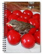 Sparrow On Red Eggs Spiral Notebook
