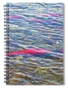 Spawning Salmon In Moraine River In Katmai National Preserve-ak Spiral Notebook