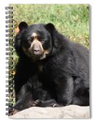 Speckled Bear Spiral Notebook