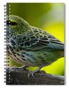Speckled Tanager - Tangara Guttata Spiral Notebook