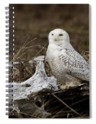 Spectacular Owl Spiral Notebook