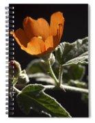 Sphaeralcea Ambigua Spiral Notebook