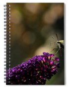 Sphinx Moth On Butterfly Bush Spiral Notebook