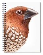 Spice Finch Lonchura Punctulata Portrait Spiral Notebook
