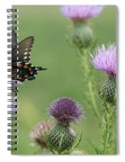 Spicebush Swallowtail Butterfly On Bull Thistle Wildflowers Spiral Notebook