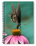 Spicebush Swallowtail Butterfly - Papilio Troilus Spiral Notebook