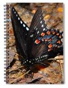 Spicebush Swallowtail Butterfly Preflight Spiral Notebook