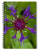 Spider Burst Spiral Notebook