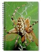 Spider Eating Moth Spiral Notebook