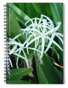 Spider Flower In Sint Maarten Spiral Notebook