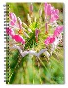 Spider Flower Spiral Notebook