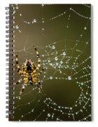 Spider In Web 5 Spiral Notebook