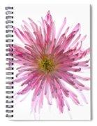 Spider Mum Flower Against White Spiral Notebook