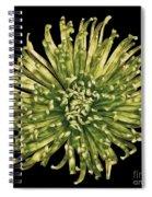 Spider Mum Spiral Notebook
