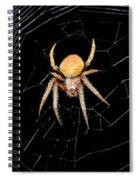 Spider Spiral Notebook