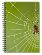 Spider Web With Dew Drops With Spider On Web Spiral Notebook
