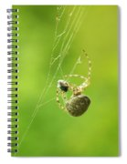 Spider Wrapping Its Food Spiral Notebook