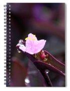 Spiderwort Dew Spiral Notebook