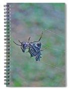 Spined Micrathena Orb Weaver Spider - Micrathena Gracilis Spiral Notebook