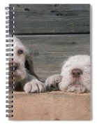 Spinone Puppies Spiral Notebook