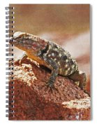 Spiny Swift Looks Over Its Domain Spiral Notebook