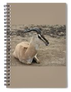 Spiral Horned Antelope Spiral Notebook