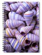 Spiral Sea Shells Spiral Notebook