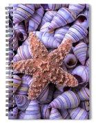 Spiral Shells And Starfish Spiral Notebook