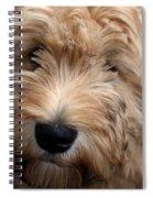 Spirited Kelsey  Spiral Notebook
