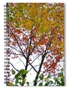 Splash Of Autumn Colors Spiral Notebook