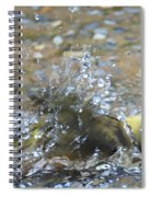 Splish Splash Bird Bath Spiral Notebook