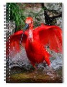 Splish Splash - Red Ibis Spiral Notebook