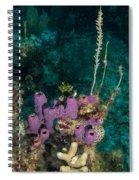 Sponge Condo Spiral Notebook