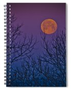 Spooky Beauty Spiral Notebook
