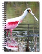 Spoonbill In The Pond Spiral Notebook