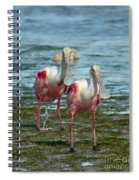 Spoonbills At The Shore Spiral Notebook