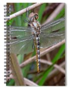 Spot Wing Glider Spiral Notebook