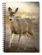 Spotlighted Mule Deer Spiral Notebook
